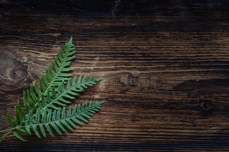 Green, Leaf, Wood, Texture royalty free stock photo