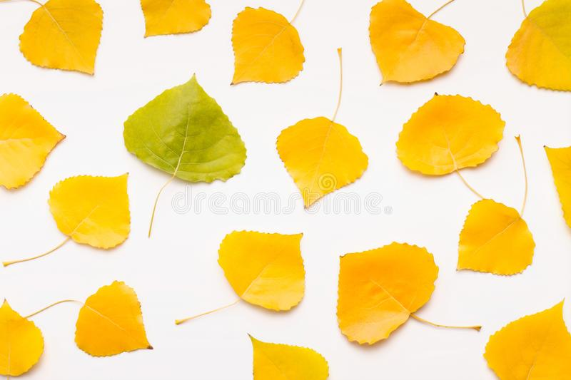 Green leaf among yellow others fallen on white background royalty free stock photography