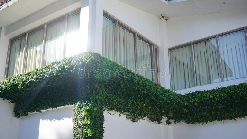 Green Leafed Plant On Balcony During Daytime Free Public Domain Cc0 Image