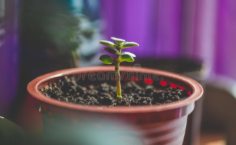 Green Leafed Plant on Brown Plastic Pot royalty free stock photography