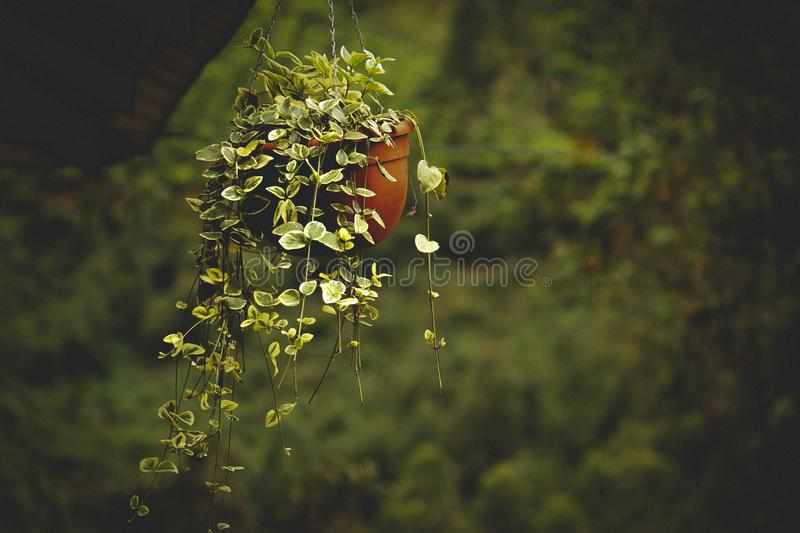 Green Leafed Plant In Brown Plastic Pot Free Public Domain Cc0 Image
