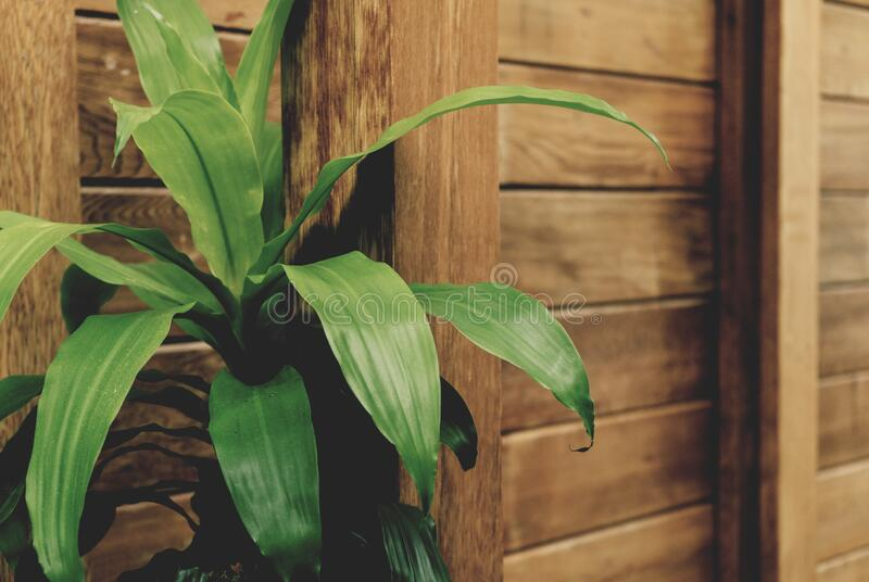 Green Leafed Plant By The Brown Wooden Fence Free Public Domain Cc0 Image