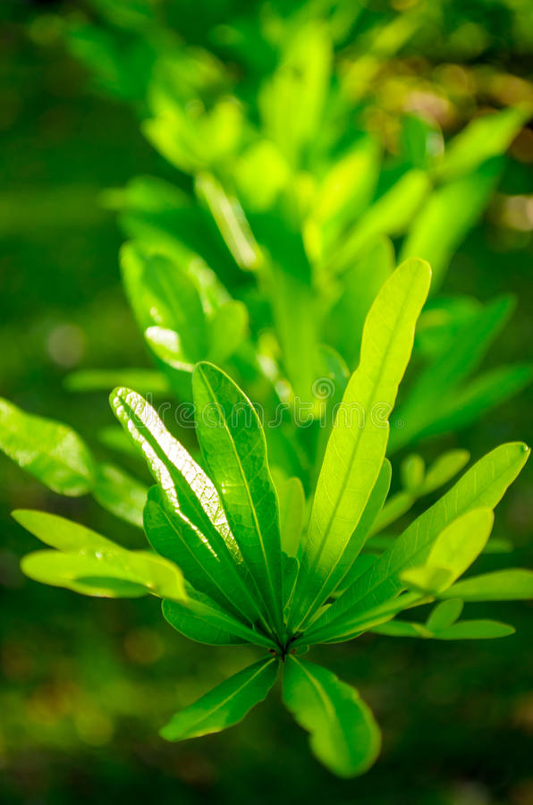Green Leafed Plant. Close up of a green leafed plant royalty free stock images