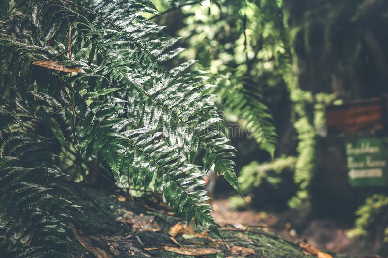 Green Leafed Plant at Daytime stock photo
