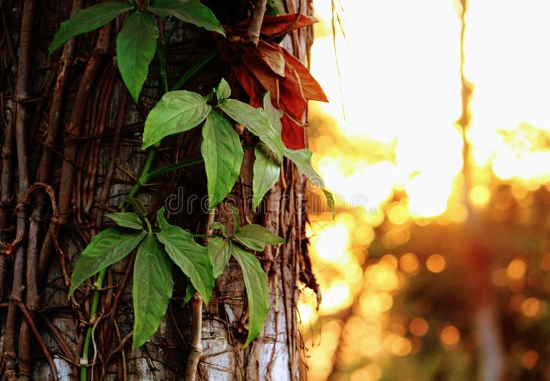 Green Leafed Plant Hanged on Brown Surface royalty free stock images