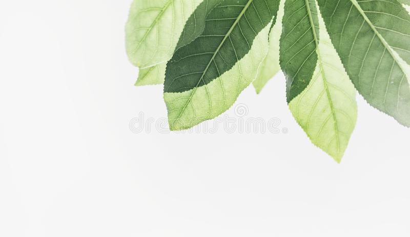 Green Leafed Plants Free Public Domain Cc0 Image