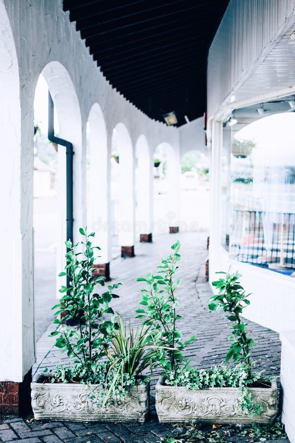 Green Leafed Plants on Hallway royalty free stock photos