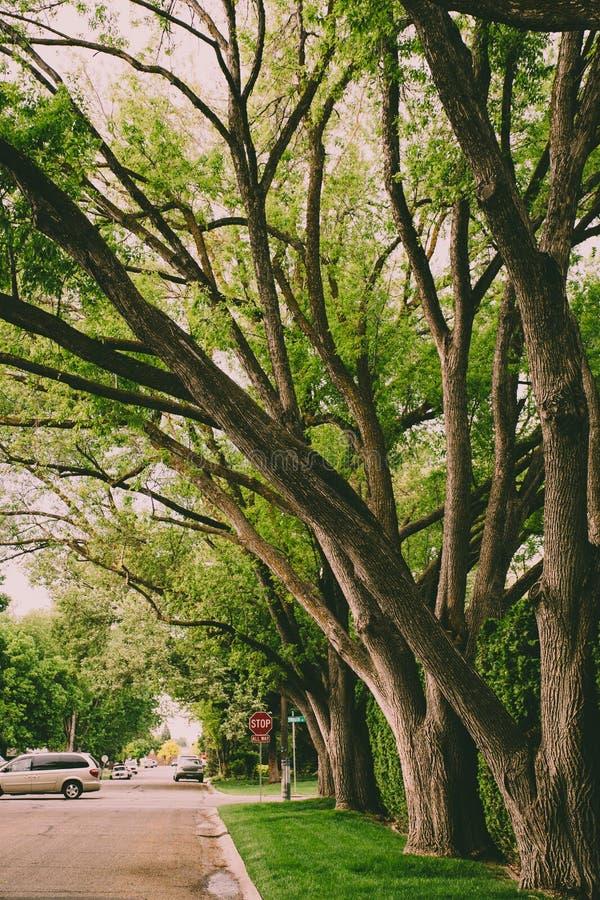 Green Leafed Trees Near Gray Van royalty free stock photo