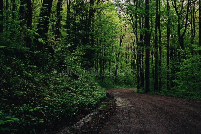 Green Leafed Trees Beside Road stock photos
