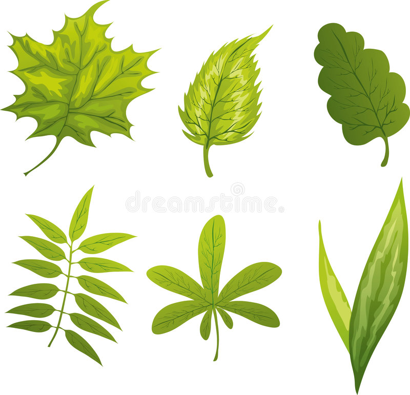 Download Green leafs stock vector. Illustration of group, element - 2372357