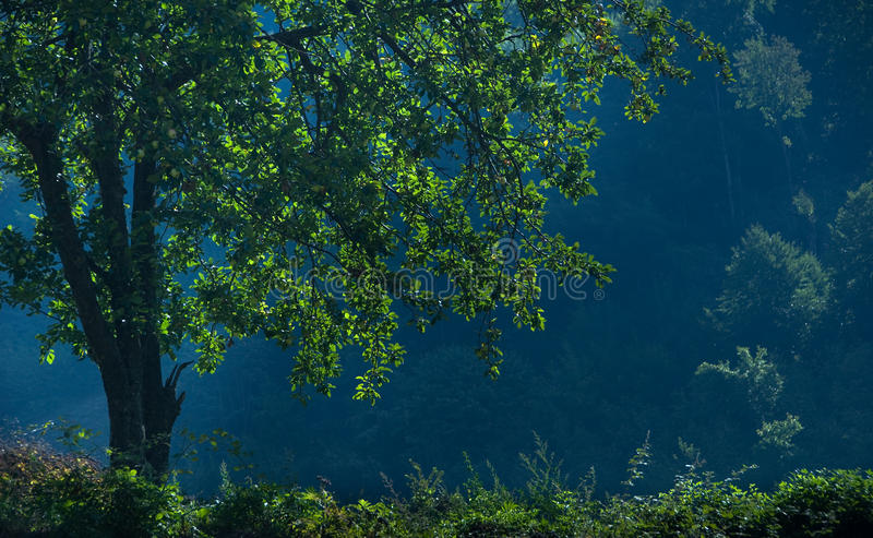 Download Green leafs stock image. Image of woods, leafs, summer - 24396149