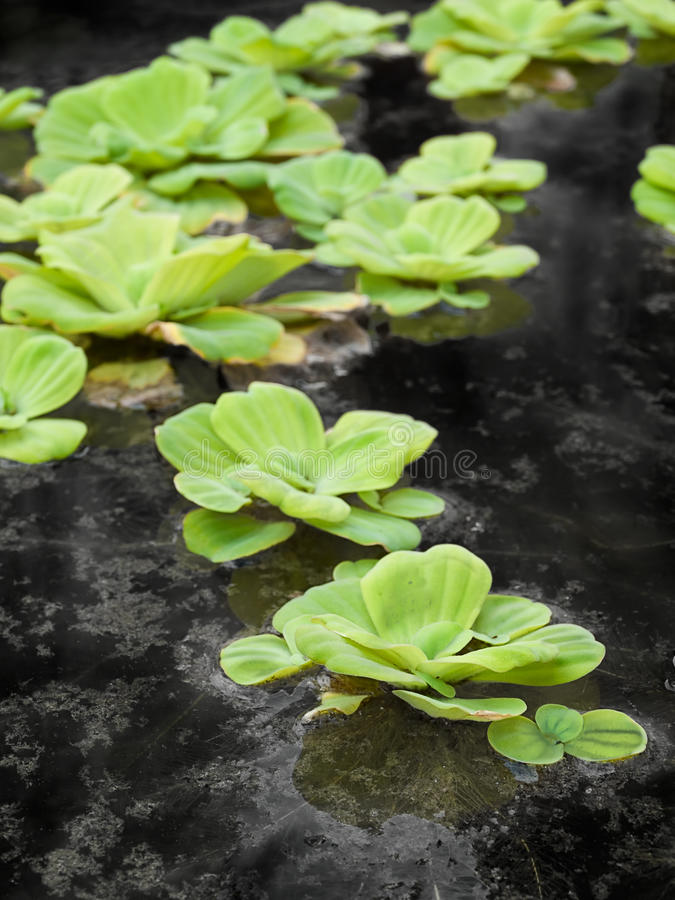 Download Green Leafs Royalty Free Stock Photos - Image: 25065448