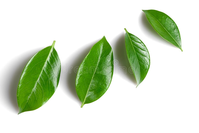 Download Green leafs stock image. Image of green, abstract, leafs - 5541099