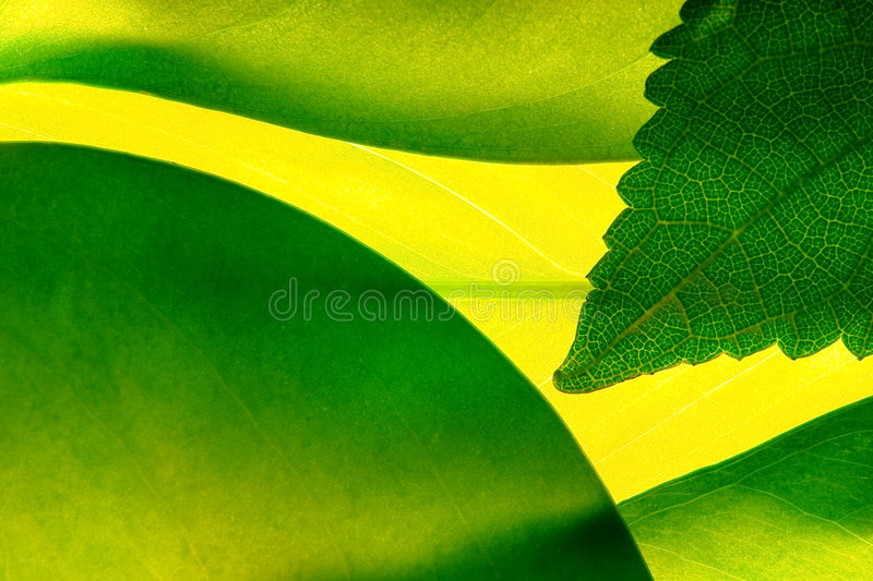 Green leafs stock images