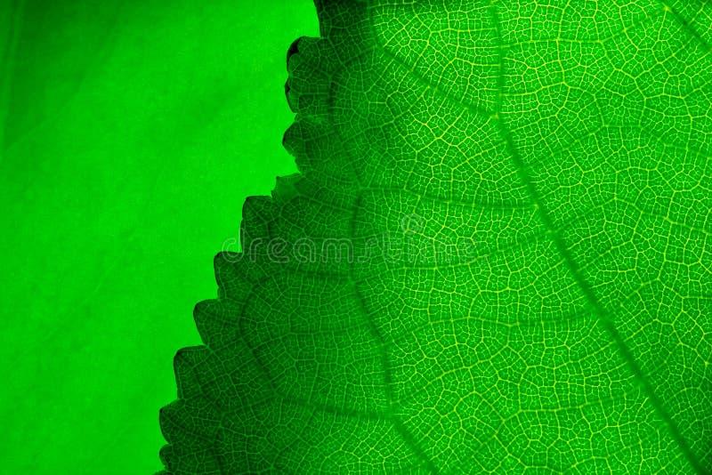 Green leafs stock photos