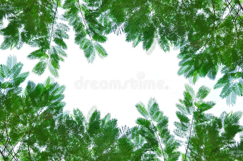 Green Leafs Isolated On White Stock Photography