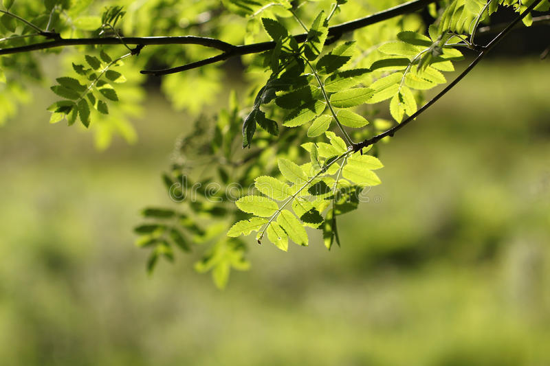 Download Green leafs stock photo. Image of spring, textures, details - 31473266