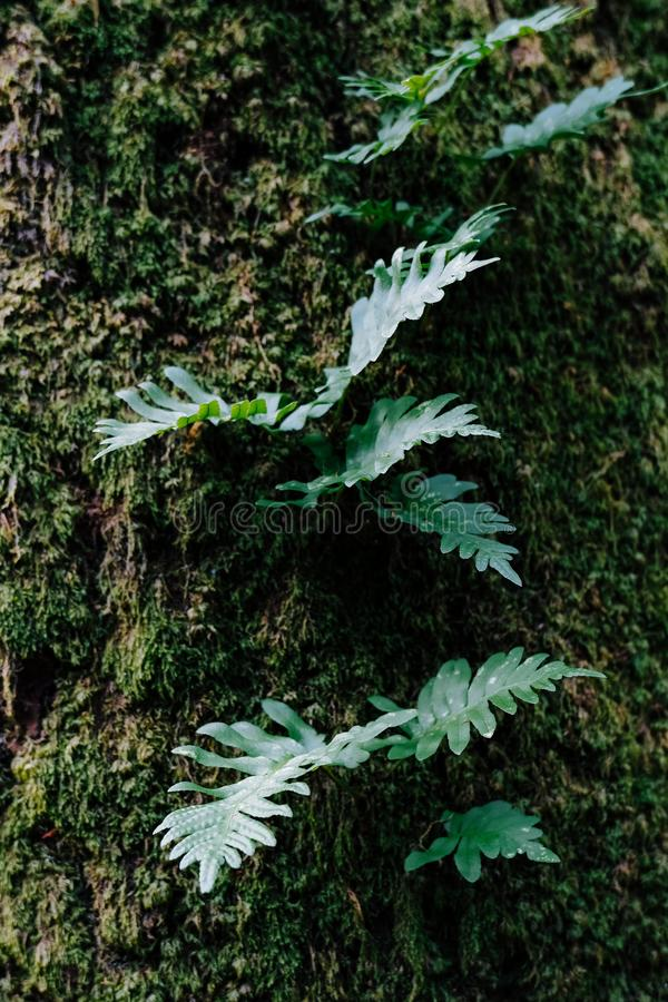 Green Leafs in a Tree Trunk. Several Green Leafs in a Tree Trunk in a Forest stock images