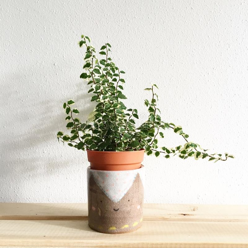 Green Leafy Plant Potted on Clay Pot royalty free stock photography