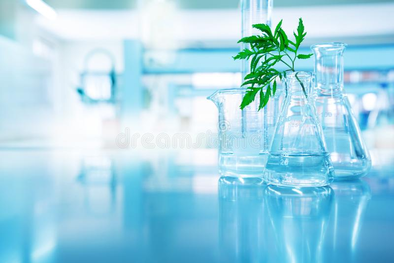 Green leave in biotechnology science research laboratory with fl. Ask beaker cylinder and water in blue technology background stock images