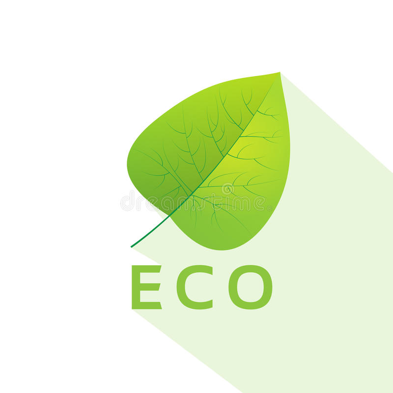 Green leave eco flat icon vector royalty free illustration