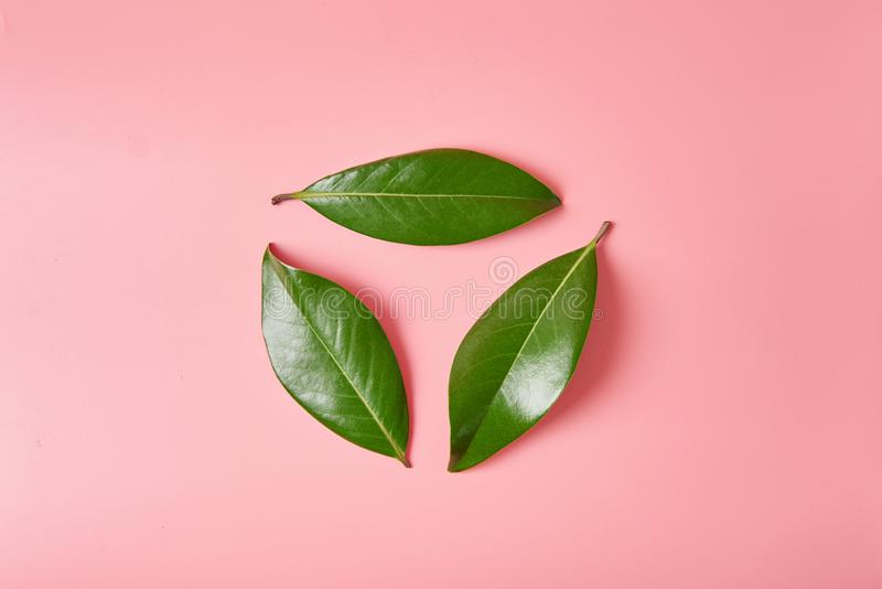 Green leave logo recycle sign or in shape of recycle symbol made of leaves of magnolia on pink stock photography