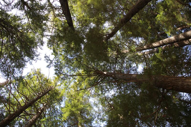 Green Leaved Trees Free Public Domain Cc0 Image