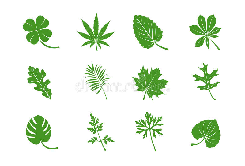 Download Green Leaves Royalty Free Stock Photo - Image: 15769885
