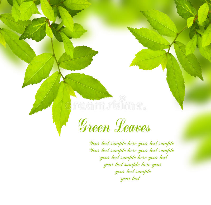 Free Green Leaves Royalty Free Stock Image - 17529786