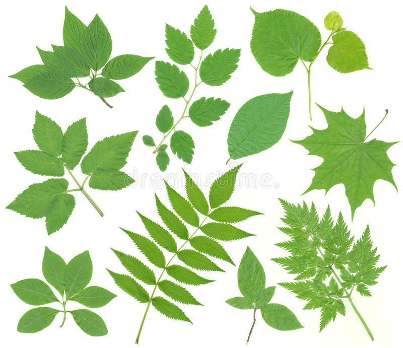 Download Green leaves stock image. Image of garden, different - 21022837