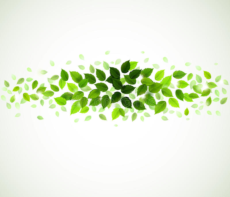 Green leaves royalty free illustration