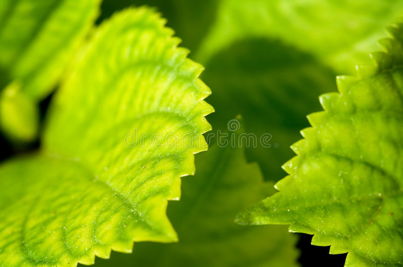 Download Green leaves stock photo. Image of life, structure, leaves - 2320840
