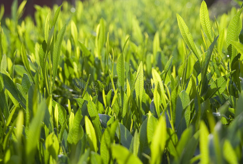 Download Green leaves stock image. Image of grass, plant, sunlight - 23875105