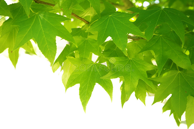Download Green leaves stock image. Image of green, space, summer - 2413177