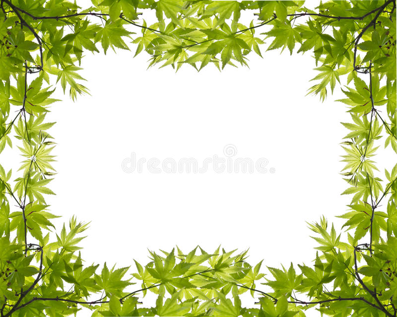 Download Green leaves stock image. Image of bright, leaf, fresh - 24238729