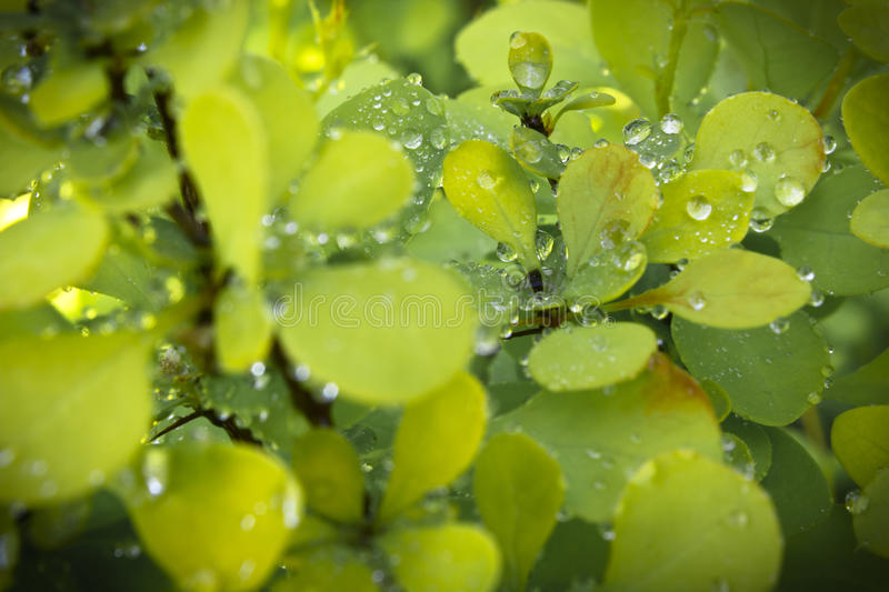 Download Green leaves stock photo. Image of object, green, sunny - 24767394