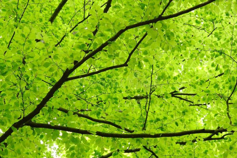 Download Green leaves stock photo. Image of broad, spring, vegetation - 24901042