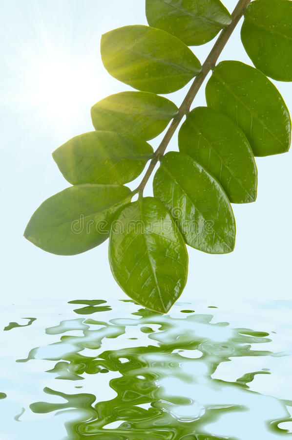 Download Green Leaves Stock Photos - Image: 25924183