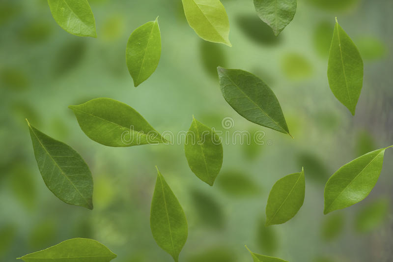 Download Green leaves stock image. Image of white, close, growth - 26421939