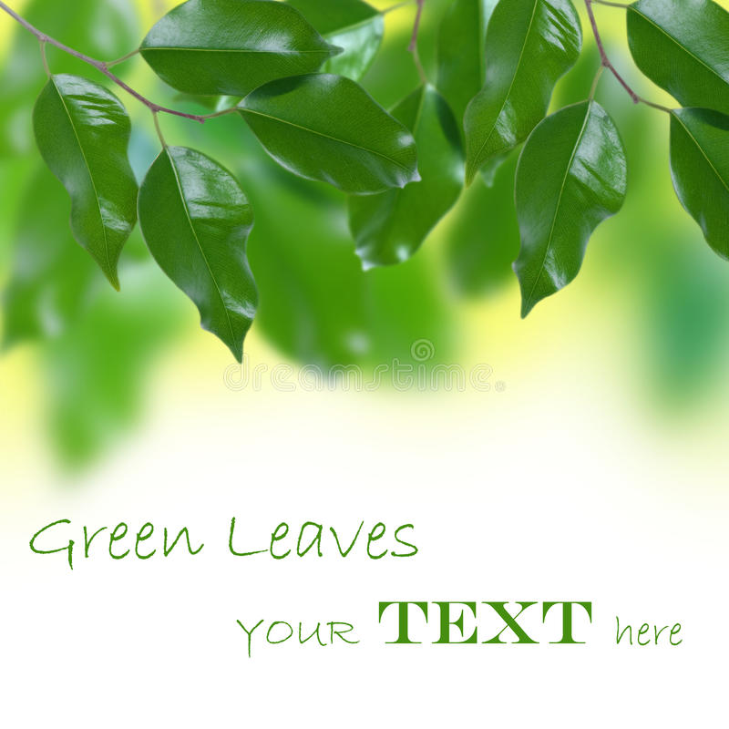 Download Green leaves stock image. Image of color, green, decoration - 28802453