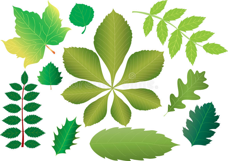 green leaves vektor illustrationer