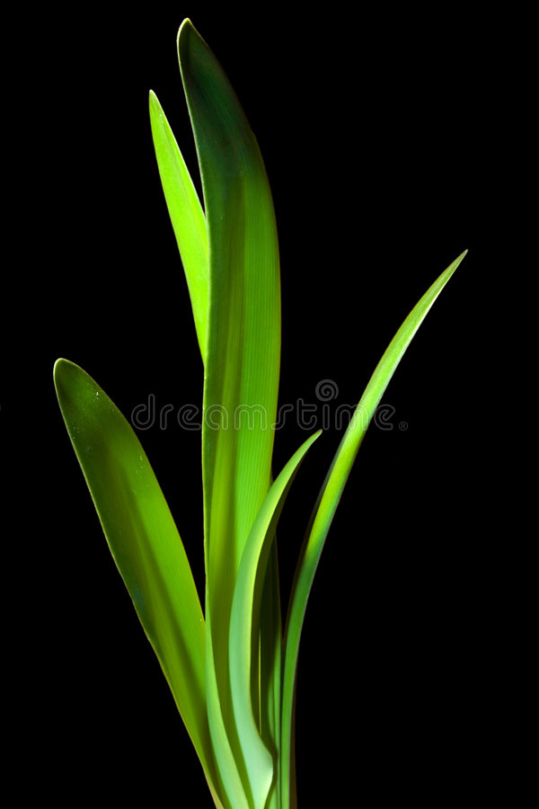 Free Green Leaves Stock Image - 557781
