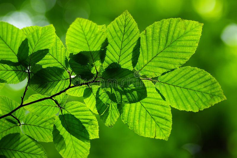 Download Green leaves stock photo. Image of background, macro, plants - 5844052
