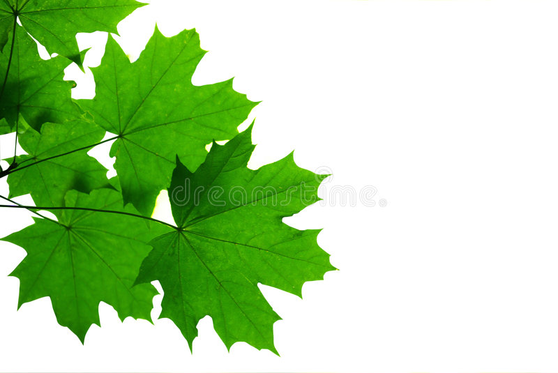 Download Green leaves stock photo. Image of outdoors, tree, woods - 5864298