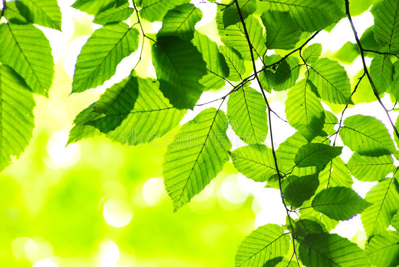 Download Green leaves stock image. Image of branches, tree, plants - 5933877