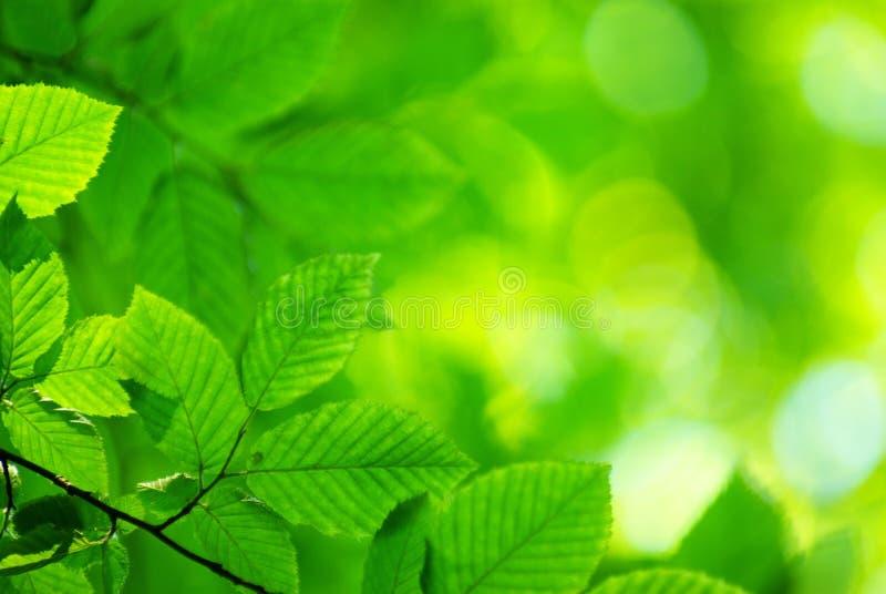 Download Green leaves stock image. Image of light, summer, plants - 6376063