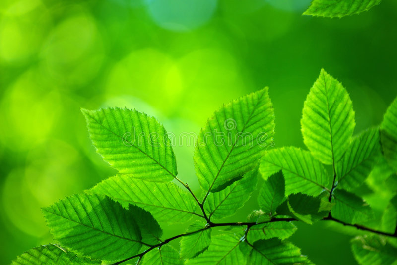 Download Green leaves stock image. Image of summer, growth, freshness - 6707233