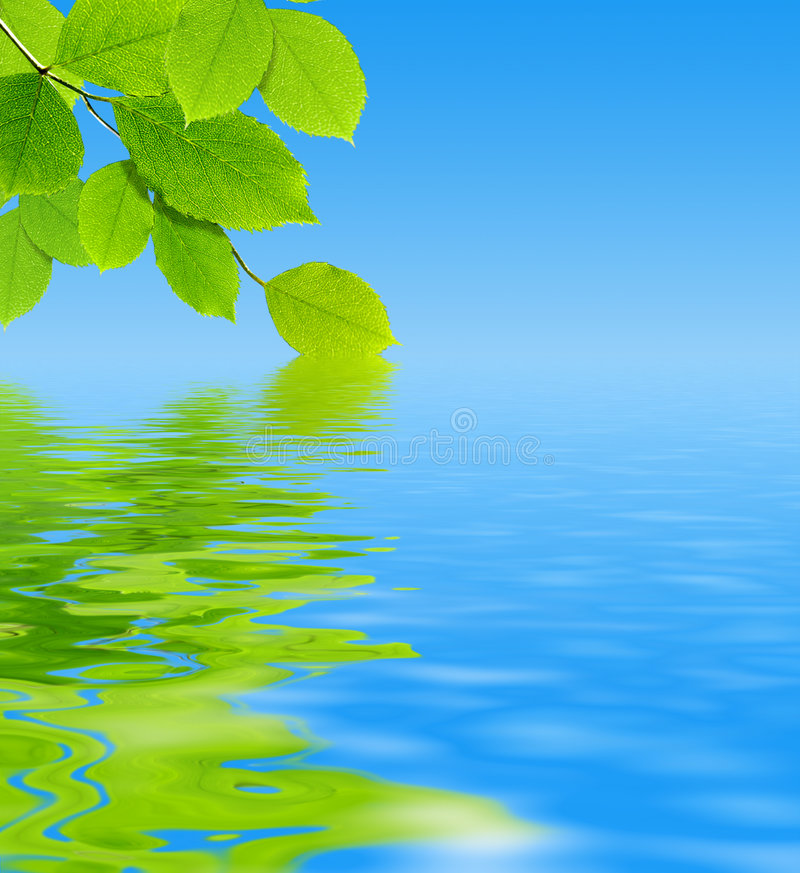 Download Green leaves stock image. Image of bright, foliage, blue - 7283133