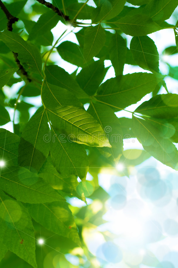 Download Green  Leaves Stock Images - Image: 7517874