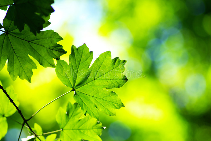 Download Green Leaves Royalty Free Stock Photography - Image: 7534167